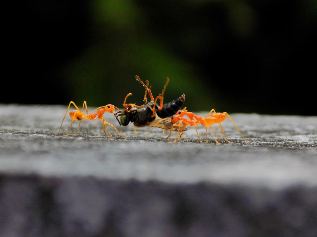Ants, how many ants per human, needforlife, Total Weight Of Ants, weight, weight of all humans on earth, weight of ants