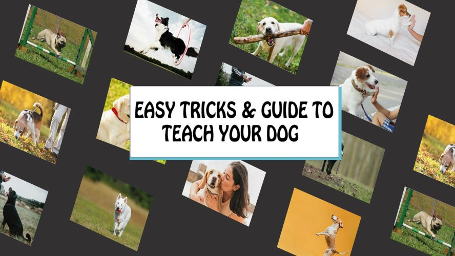 Dog TRAINING | Easy Tricks & Guide To Teach Your Dog, dog training, needforlife.info, need for life, needforlife, dog tricks, teach your dog tricks, train dogs,