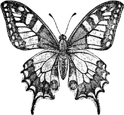 Butterfly Patterns To Trace