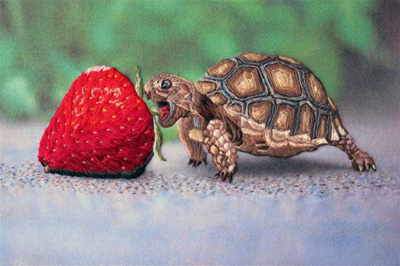 Cute Turtle Drawing Wallpaper The Tortoise Amp The Strawberry Needlenthread Com