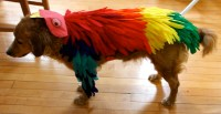 How to Make a Bird Costume for a Dog - Needles and Know How