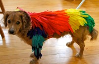 10 Adorable Homemade Halloween Dog Costumes - Needles and ...