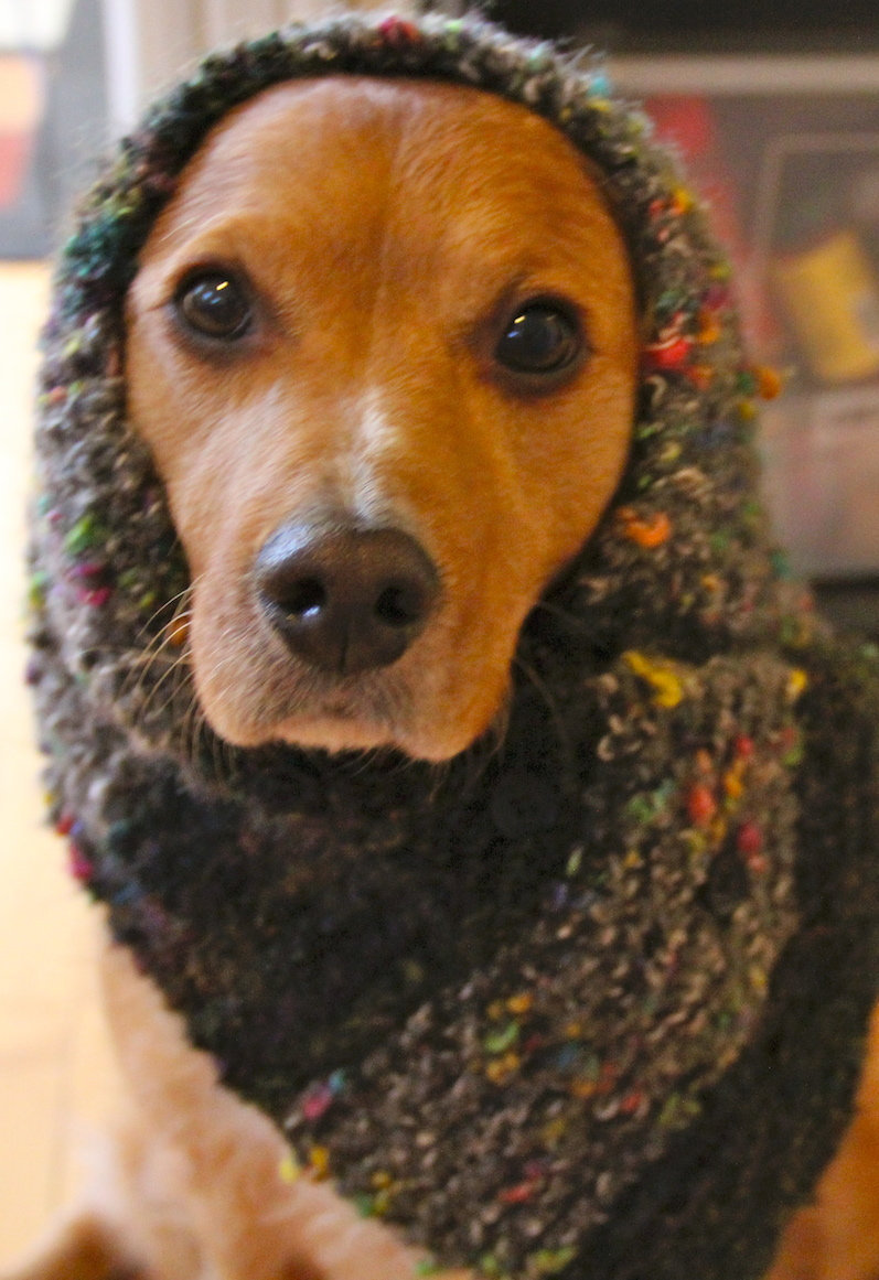 How to Knit a Neck Warmer or Scarf for a dog  Needles and Know How