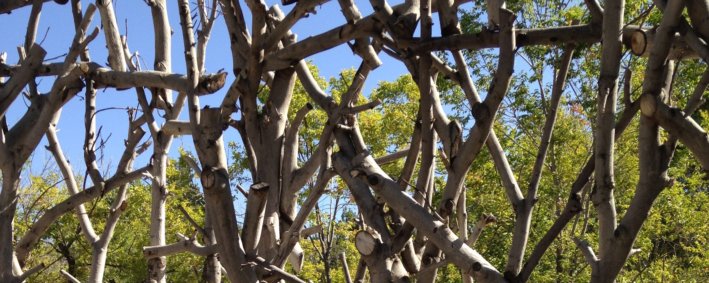 photograph of stressful tangled branches