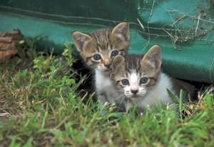 Een kitten in huis  Negen Levens