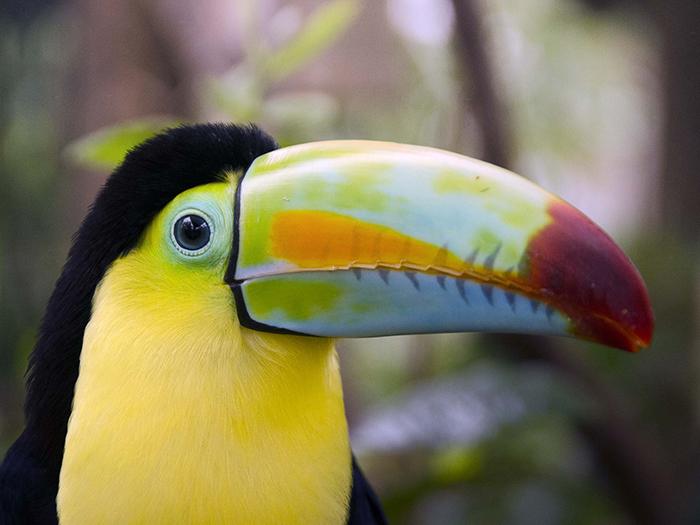 Costa_Rica_Turismo