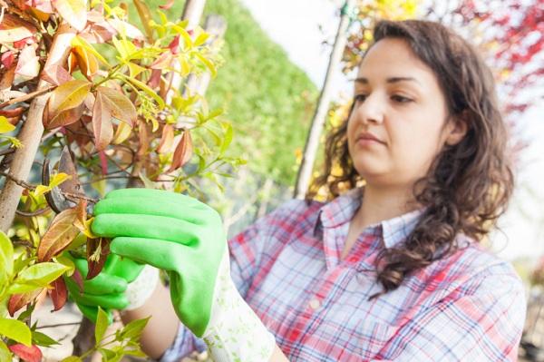 Negozi di attrezzi da giardinaggio a Roma  Negozi Di Roma
