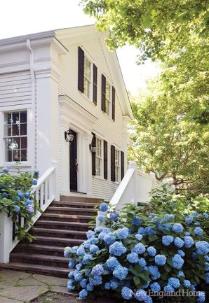Lush hydrangea bushes surround the house.