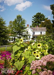 Polly Lewis garden