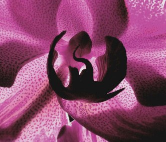 """Orchid Detail"" by Robert Preston"