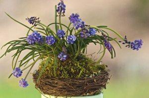 Spring Bulb Arangement