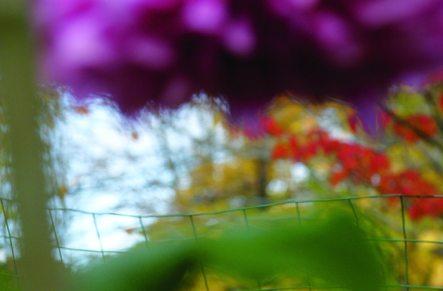 frances garden