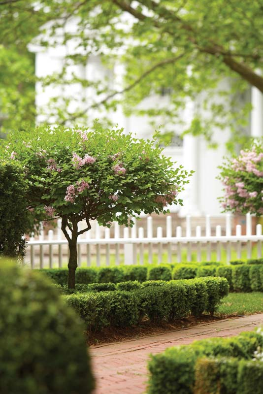 Behind the pristine white fence, lilac standards and well-clipped boxwood hedges enhance the reborn historic home'€™s character.