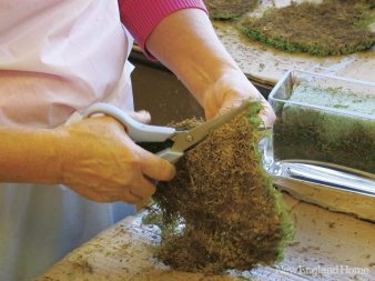 """Natural moss is trimmed before """"planting""""€ in pots."""