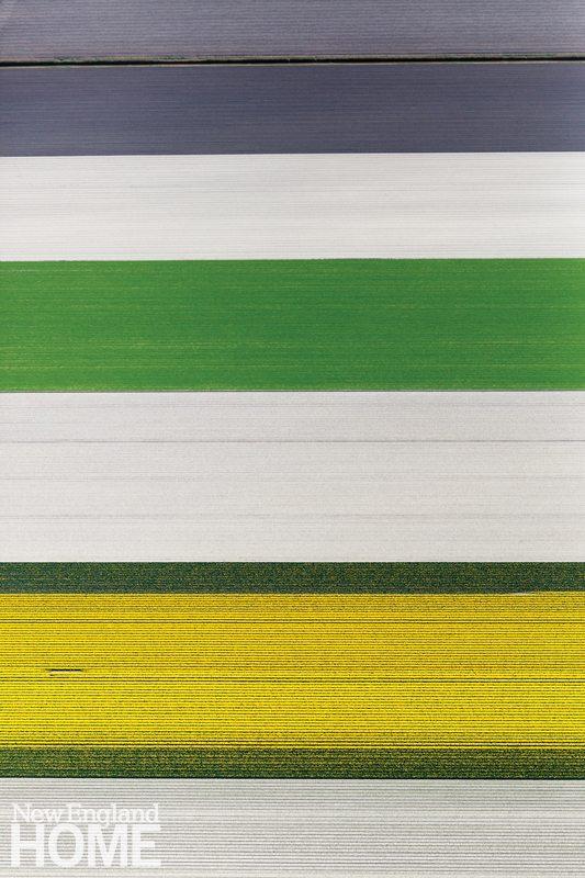 Alex MacLean_Tulip Field Sequence