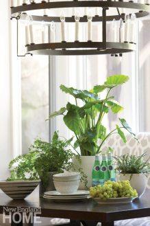Vignette with plants