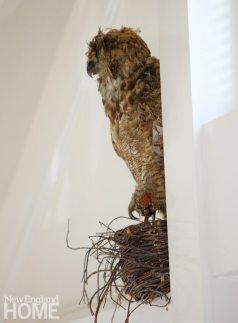 Renovated Barn Owl Taxidermy