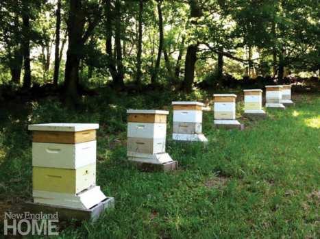 Bees_02 copy