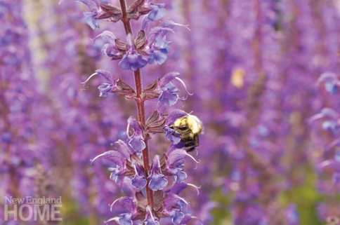 ways to invite nature into your landscape bees