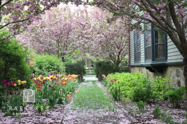 Loughlin-tulips-2019-w-extra-cherries