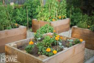 Raised vegetable beds in Greenwich