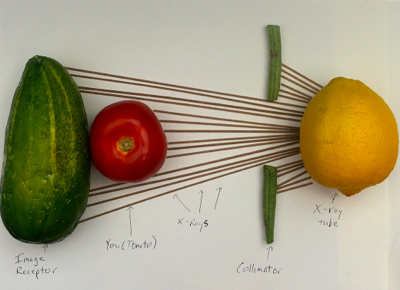 X-ray machine diagram made with fruit and vegetables