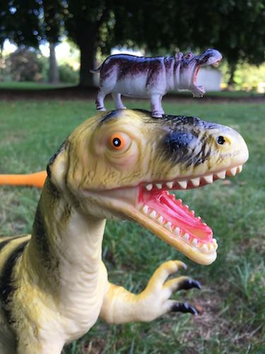 toy hippo on top dinosaur's head