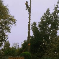 Tall Tree Work