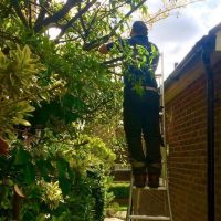 Hedge pruning in Winchester