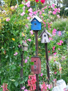 birdhouses and flowers