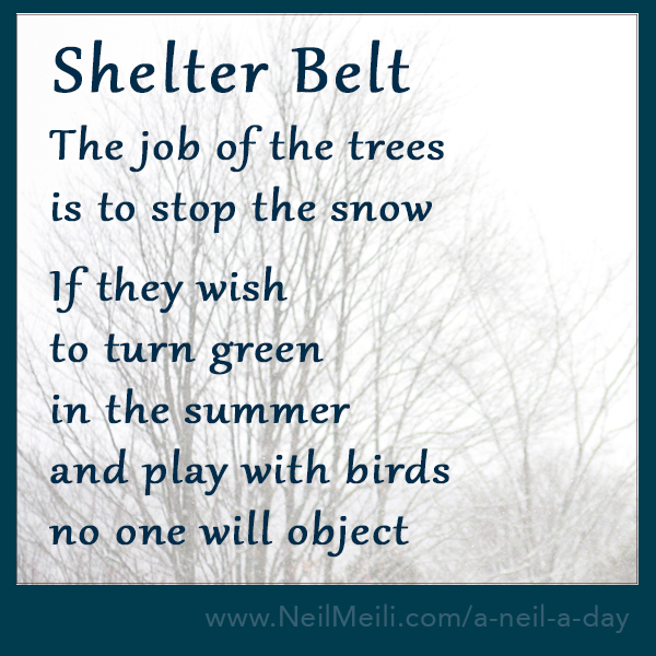 The job of the trees is to stop the snow  If they wish to turn green in the summer and play with birds no one will object