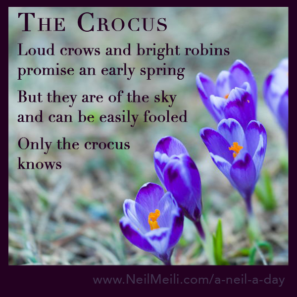 Loud crows and bright robins promise an early spring  But they are of the sky and can be easily fooled  Only the crocus knows