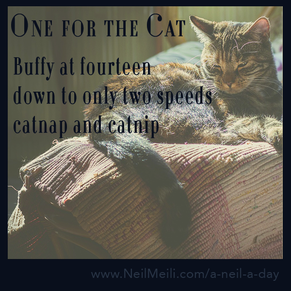 Buffy at fourteen down to only two speeds catnap and catnip