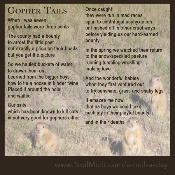 When I was seven gopher tails were three cents  The county had a bounty  to arrest the little pest not exactly a price on their heads but you get the picture  So we hauled buckets of water to drown them out Learned from the bigger boys how to tie a noose in binder twine Placed it around the hole and waited  Curiosity  which has been known to kill cats is not very good for gophers either  Once caught they were run in mad races spun to centrifugal asphyxiation or finished off in other cruel ways before yielding us our hard-earned bounty  In the spring we watched their return to the snow-speckled pasture running tumbling wrestling making love  And the wonderful babies when they first ventured out to try sunshine, grass and shaky legs  It amazes me now  that as boys we could take  such joy in their playful beauty  and in their deaths
