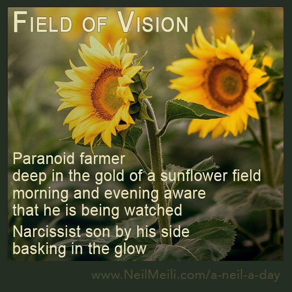 Paranoid farmer deep in the gold of a sunflower field morning and evening aware  that he is being watched  Narcissist son by his side  basking in the glow