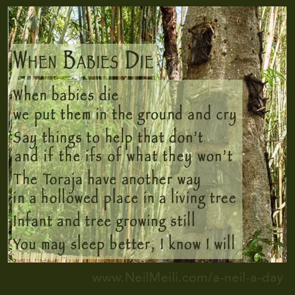 When babies die we put them in the ground and cry  Say things to help that don't  and if the ifs of what they won't  The Toraja have another way in a hollowed place in a living tree  Infant and tree growing still  You may sleep better, I know I will