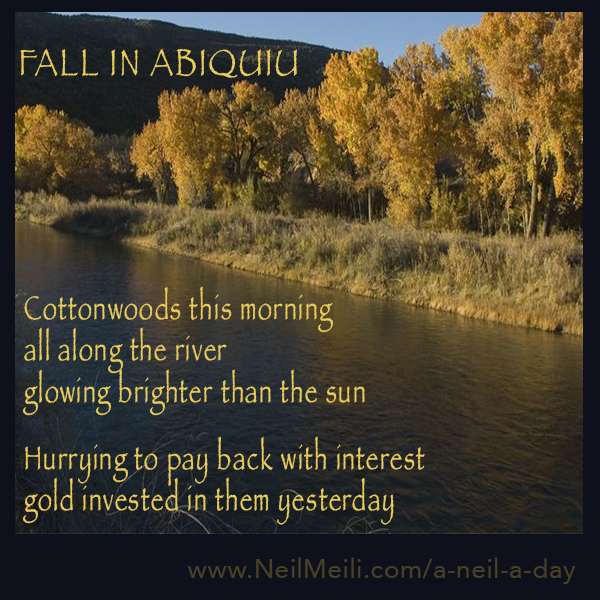 Cottonwoods this morning all along the river glowing brighter than the sun  Hurrying to pay back with interest gold invested in them yesterday