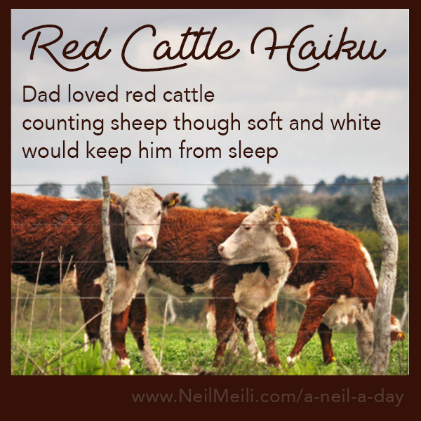 Dad loved red cattle counting sheep though soft and white would keep him from sleep
