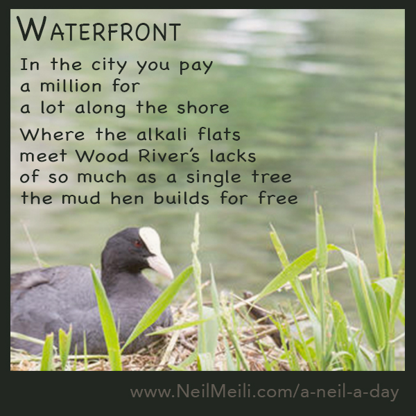 In the city you pay a million for a lot along the shore  Where the alkali flats meet Wood River's lacks of so much as a single tree the mud hen builds for free