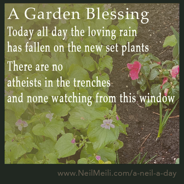 Today all day the loving rain has fallen on the new set plants  There are no atheists in the trenches and none watching from this window