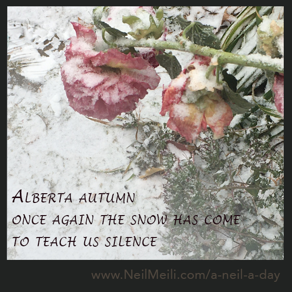 Alberta autumn once again the snow has come to teach us silence