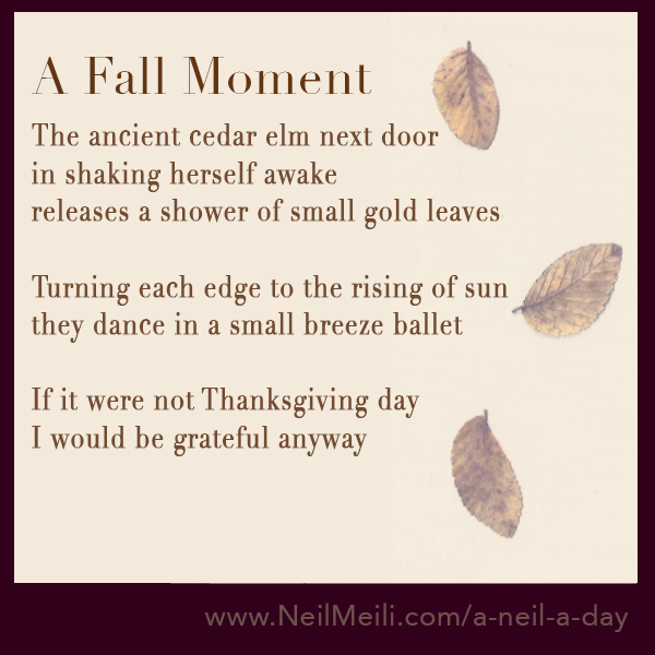 The ancient cedar elm next door in shaking herself awake releases a shower of small gold leaves  Turning each edge to the rising of sun they dance in a small breeze ballet  If it were not Thanksgiving day I would be grateful anyway