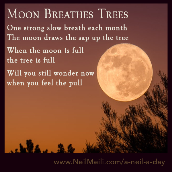 One strong slow breath each month The moon draws the sap up the tree  When the moon is full the tree is full  Will you still wonder now when you feel the pull