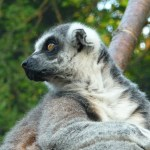 London Zoo Sunset Safari