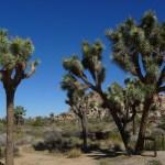 USA '17 – Day 17 – Joshua Tree National Park