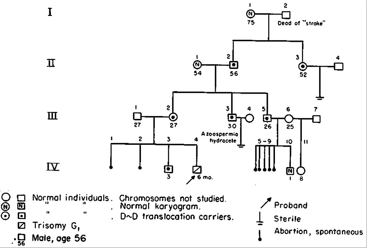 Familial D D Translocation Report Of A Pedigree And Dna Replicationysis