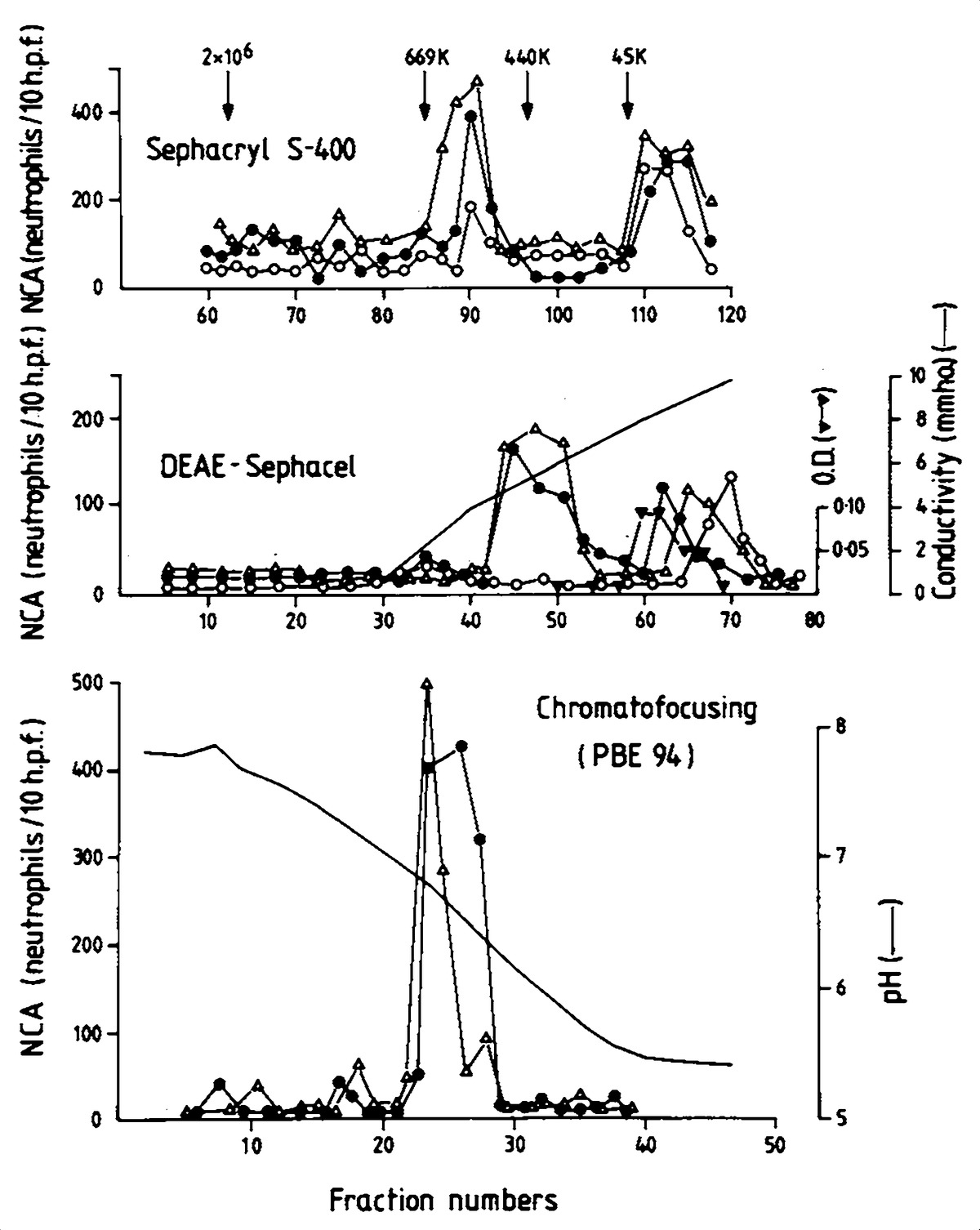 Exercise-Induced Late Asthmatic Reactions with Neutrophil