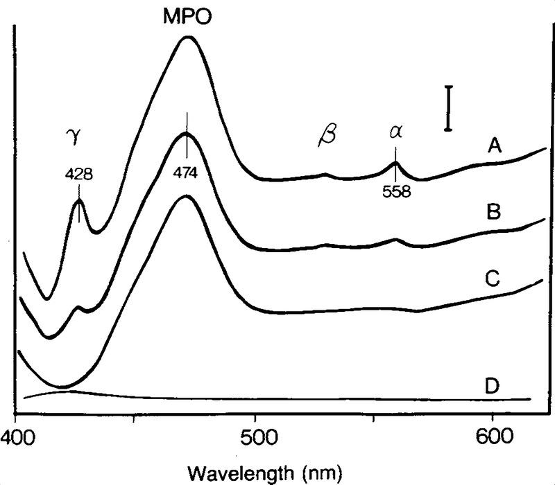 Absence of Cytochrome b-245 in Chronic Granulomatous