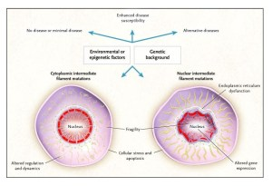 Intermediate Filament Proteins and Their Associated Diseases | NEJM