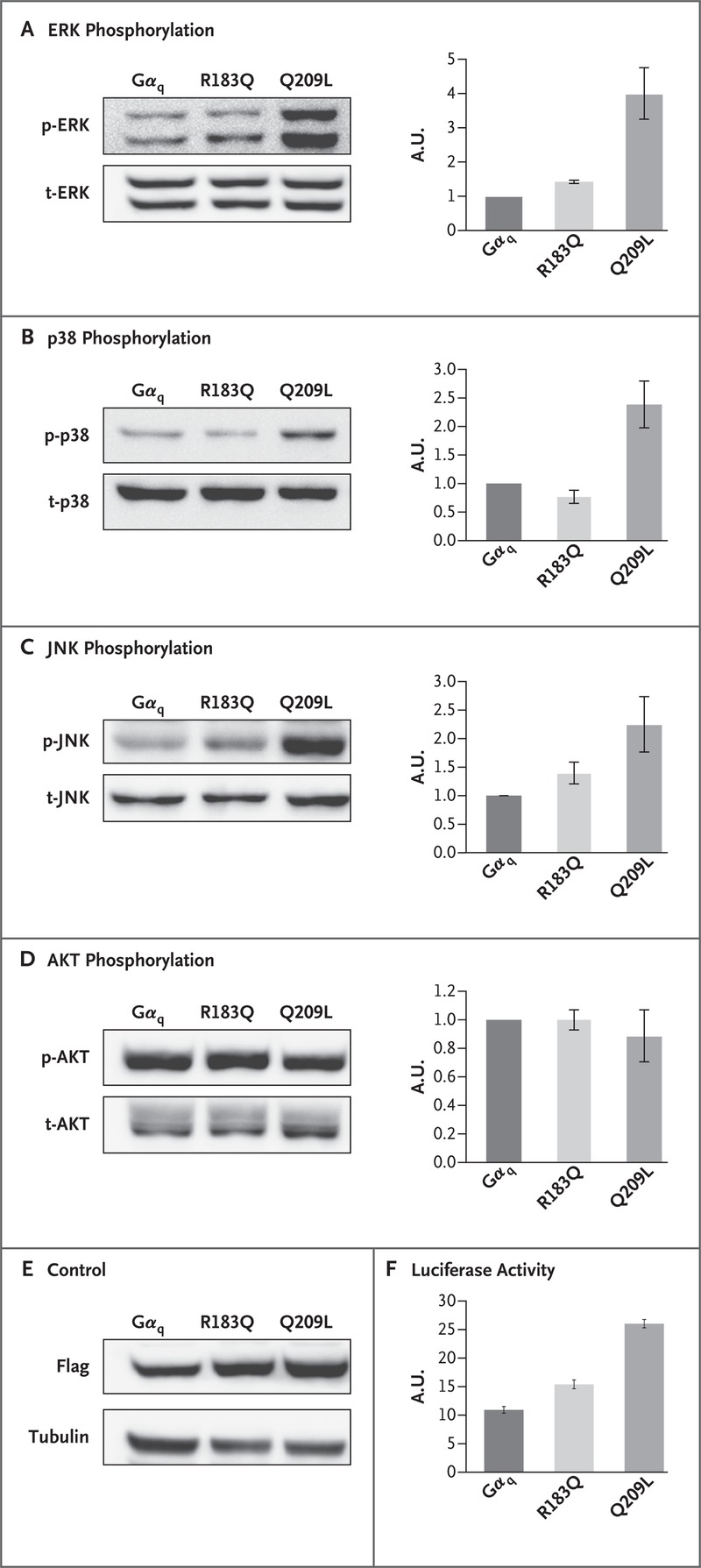 hight resolution of effect of mutation on mapk signaling pathway